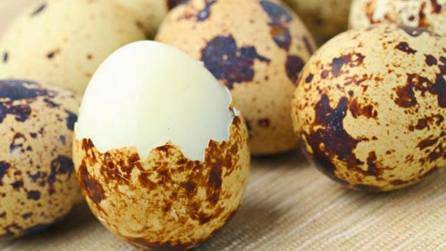 Sering Dianggap Berbahaya,Ternyata Telur Puyuh Memiliki Manfaat Yang Baik Juga