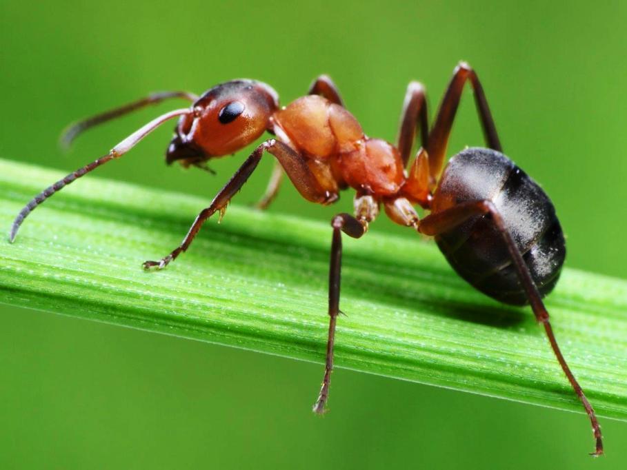 Bahan Makanan Berikut Ini Ampuh Untuk Usir Semut